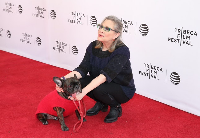 NEW YORK, NY - APRIL 19:  Gary the dog and Carrie Fisher attend Tribeca Tune In: Catastrophe at SVA Theatre 2 on April 19, 2016 in New York City.  (Photo by Robin Marchant/Getty Images for Tribeca Film Festival)