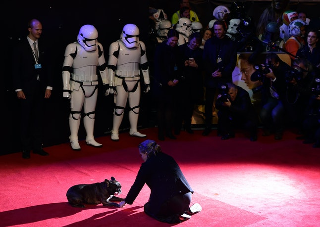 US actress Carrie Fisher pets her dog as she attends the opening of the European Premiere of 'Star Wars: The Force Awakens' in central London on December 16, 2015. Ever since 1977, when 'Star Wars' introduced the world to The Force, Jedi knights, Darth Vader, Wookiees and clever droids R2-D2 and C3PO, the sci-fi saga has built a devoted global fan base that spans the generations.