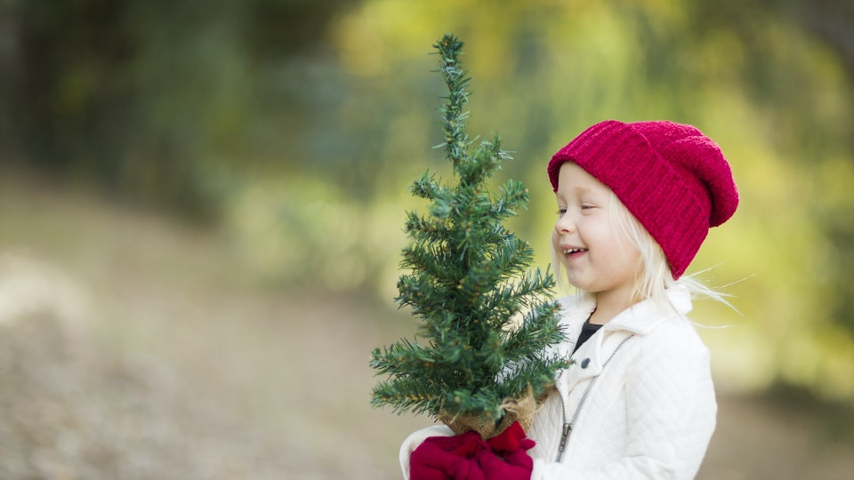 13 Reasons Why I Refuse To Get A Christmas Tree