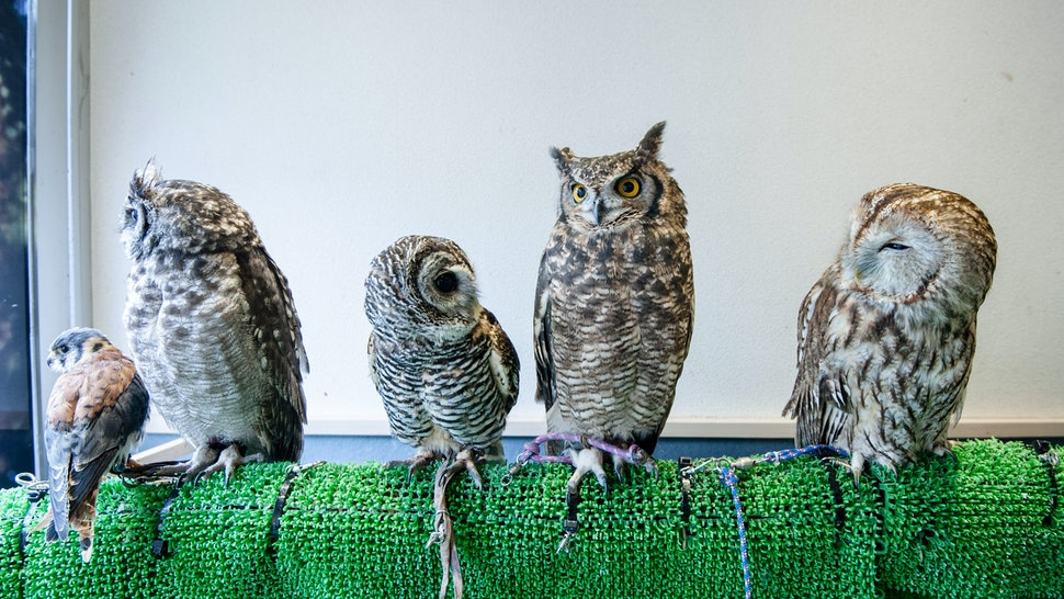 Harry Potter Fans Can Rent Time With Live Owls At These