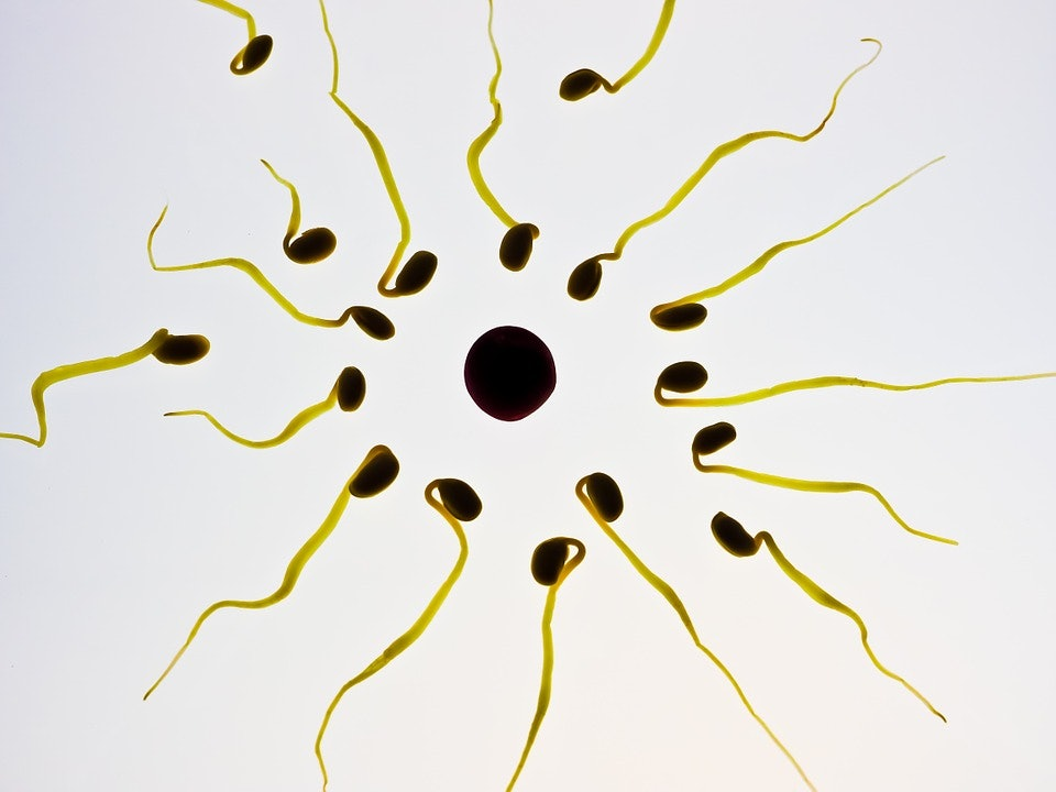 Hard seed in sperm