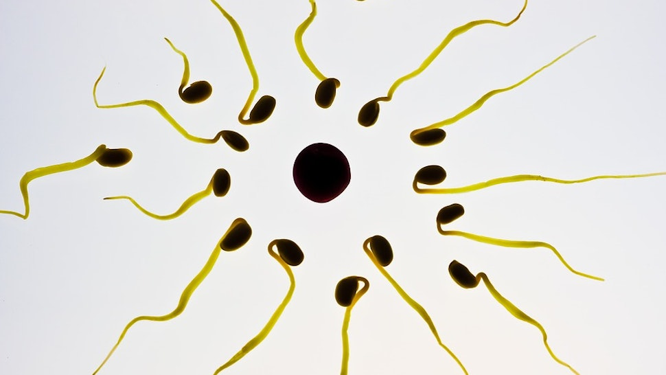 Is Sperm Good For You? 14 Claims About Semen's Health ...