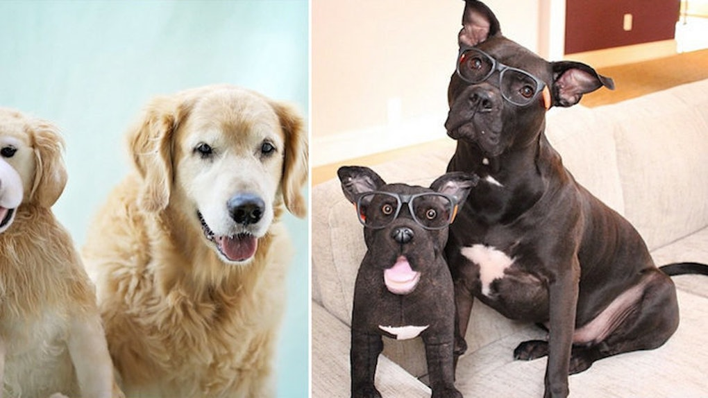 fd6c267cb41b Company Makes Amazingly Accurate Stuffed Animal Replicas Of Your Pets