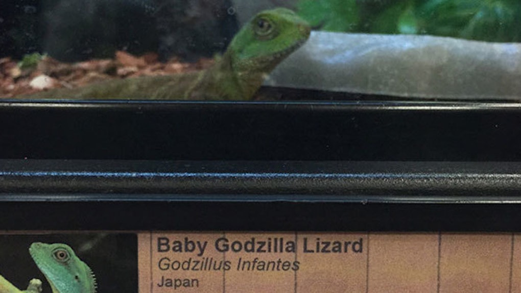 Guy Gives Pet Store Animals Ridiculous New Names By Switching Up