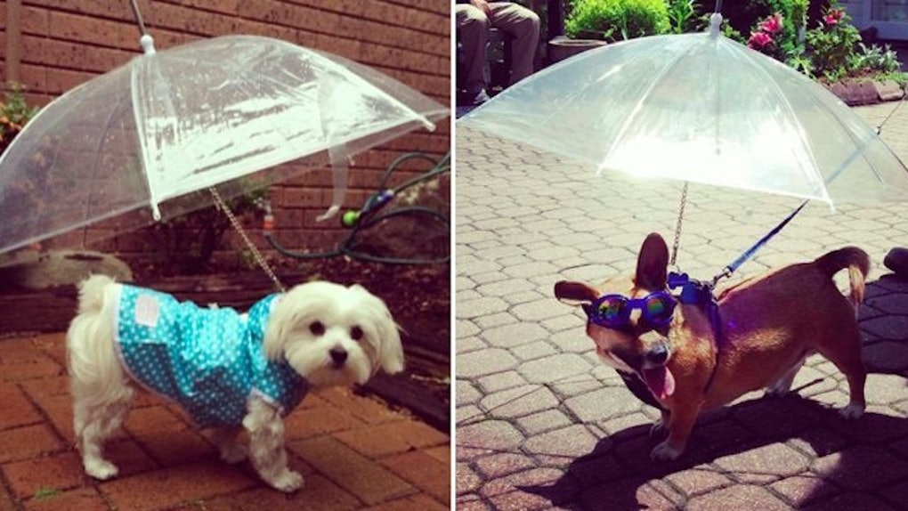 37ee9495f50c You Can Live Your Best Life Now Because Someone Invented Dog Umbrellas