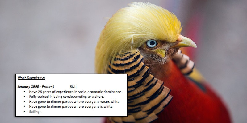 resume to work for donald trump