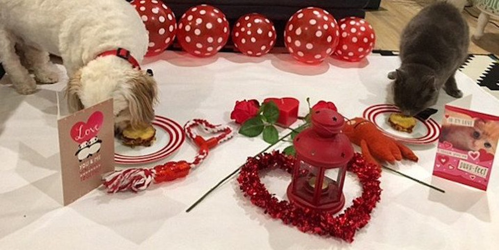 Image result for cats valentines  dinner