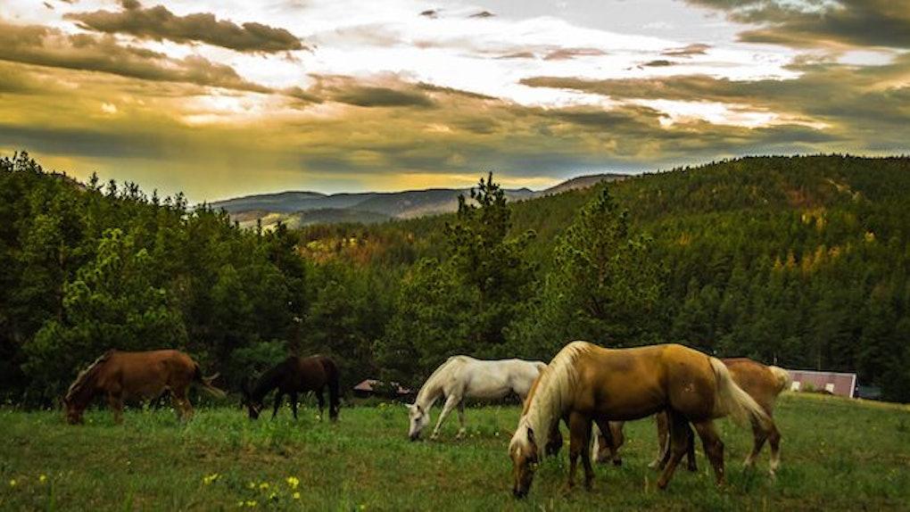 ride horseback on the thyroid gland