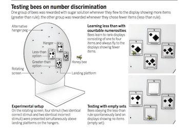 bees zero
