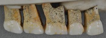 Callao Cave teeth