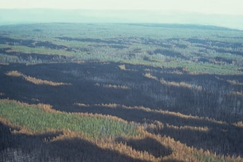 Landscape pattern of burned and unburned trees after the Yellowstone fires, October 1988.