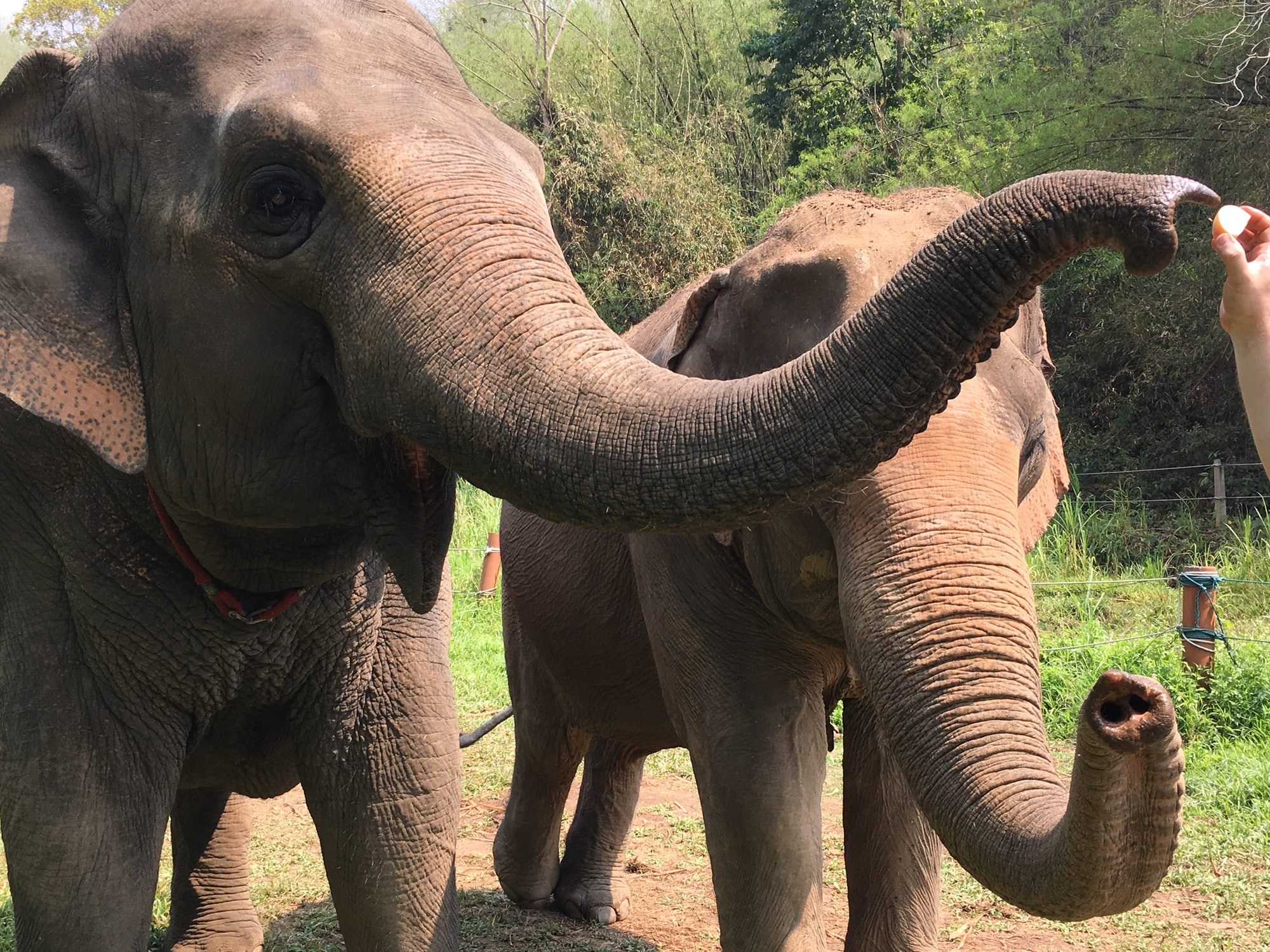 Elephants at the Golden Triangle Asian Elephant Foundation in Chiang Rai, Thailand