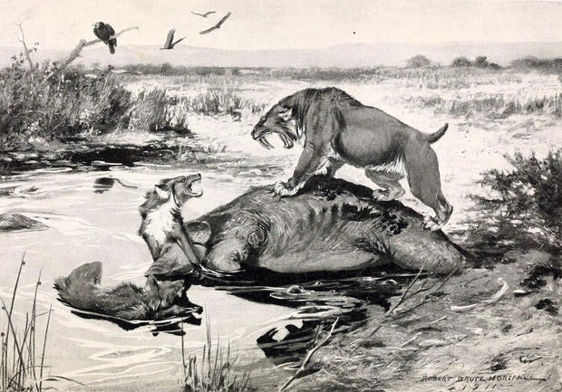 direwolf saber tooth tiger illustration etching prehistoric de-extinction