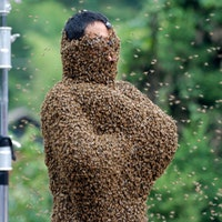 How the Disturbing 'American Horror Story' Bee Beard Was Formed