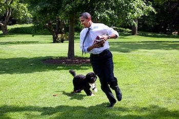 Barack Obama, dog, Bo