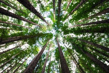 Trees could help remove carbon from the air.