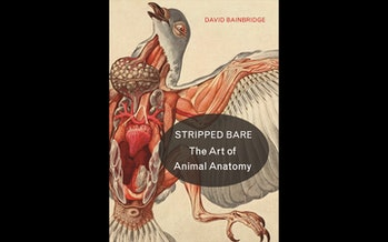 Cover of `Stripped Bare: The Art of Animal Anatomy`