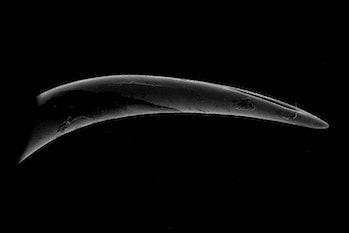 electron micrograph viper fang