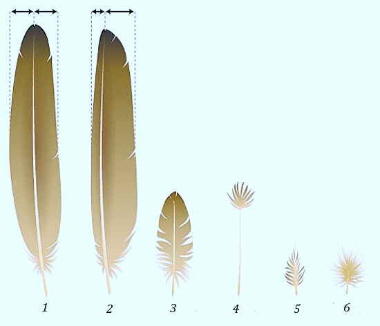 Feather comparison
