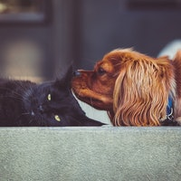 Dogs vs. Cats? There's a Simple Reason Why Americans Like One Pet More