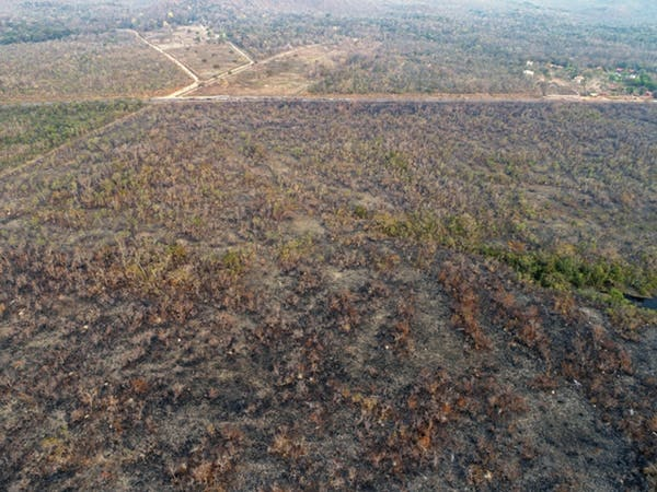 Fires in the Amazon rainforest have increased 85% on the same period last year.