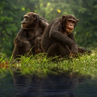 Unselfish Apes Willingly Share Food, Shedding Light on Human Generosity