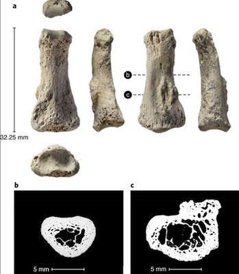 Finger bone, ancient human
