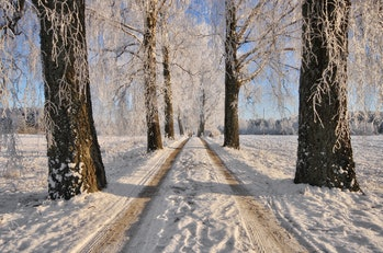 Winterland Boulevard