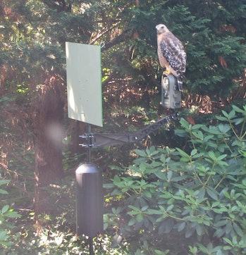 bird data collection rig