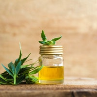 CBD and mental health: For anxiety and trauma, the cannabinoid might help