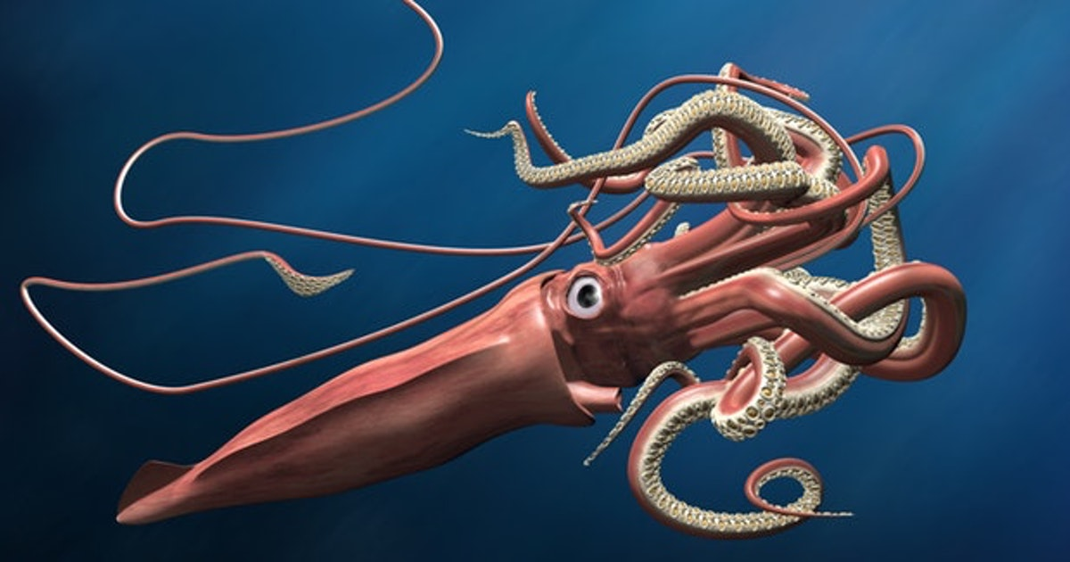Inverse Daily: giant squid, decoded