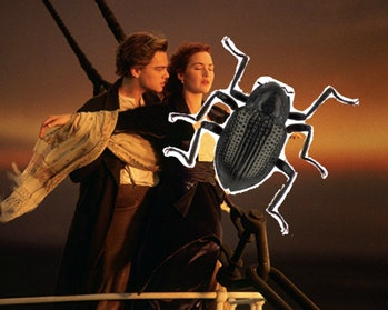 Titanic, Beetle