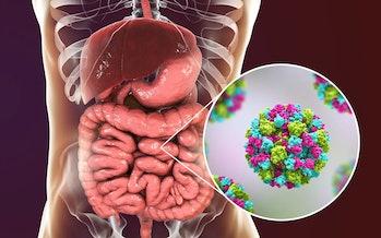 organs virus