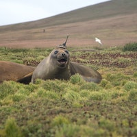 "This NASA photo of a seal wearing an antenna has a very ""deep"" explanation"