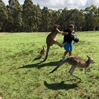 Kangaroos Cracked Out on Common Vegetables are Turning Violent