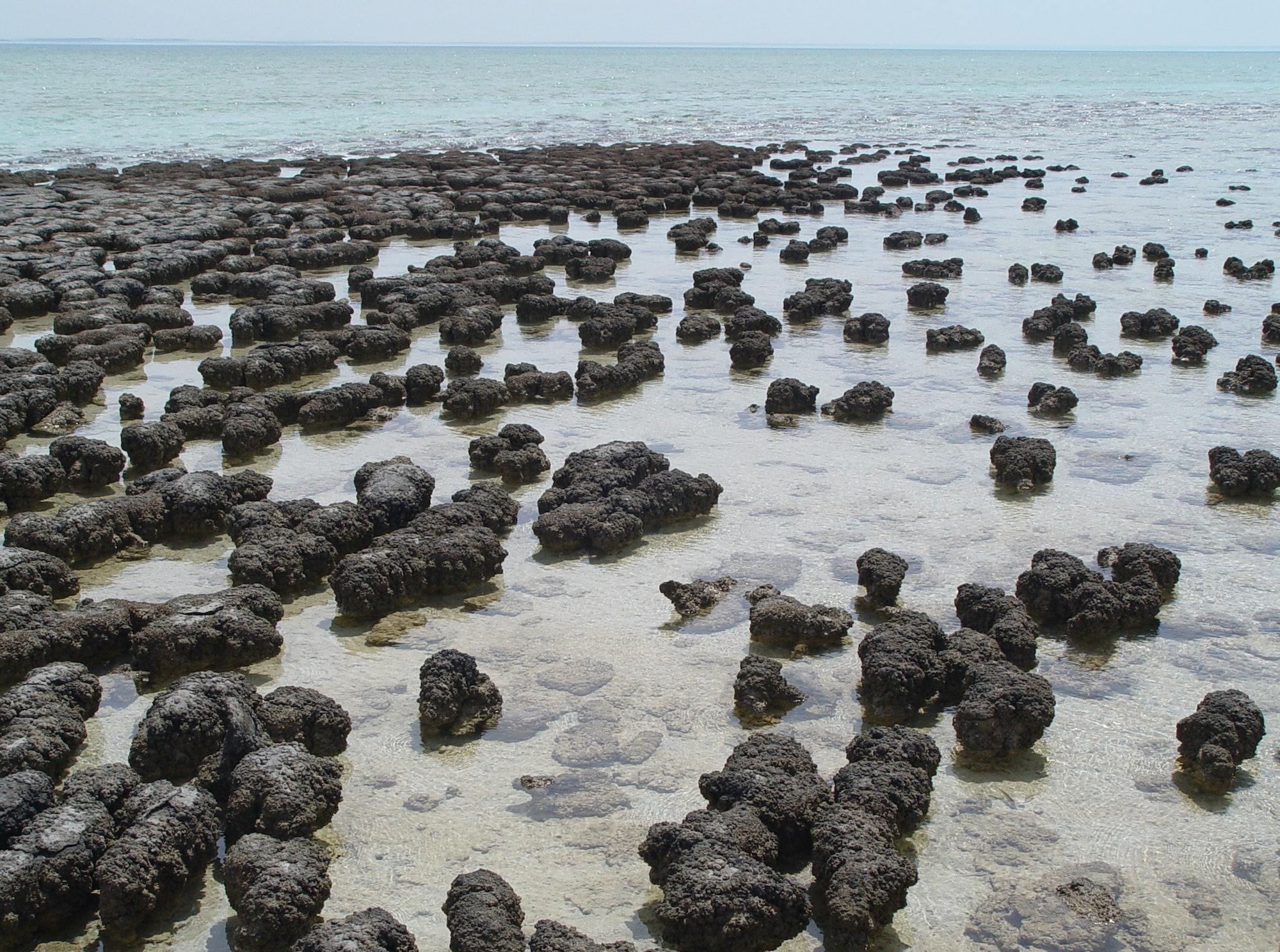 Stromatolites in Shark Bay.