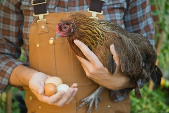 close up of man holding chicken and eggs