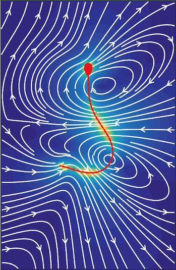 sperm bendiness illustration fertility movement