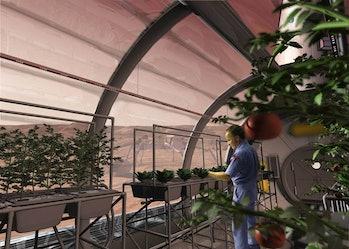 NASA's vision of hydroponics on Mars.