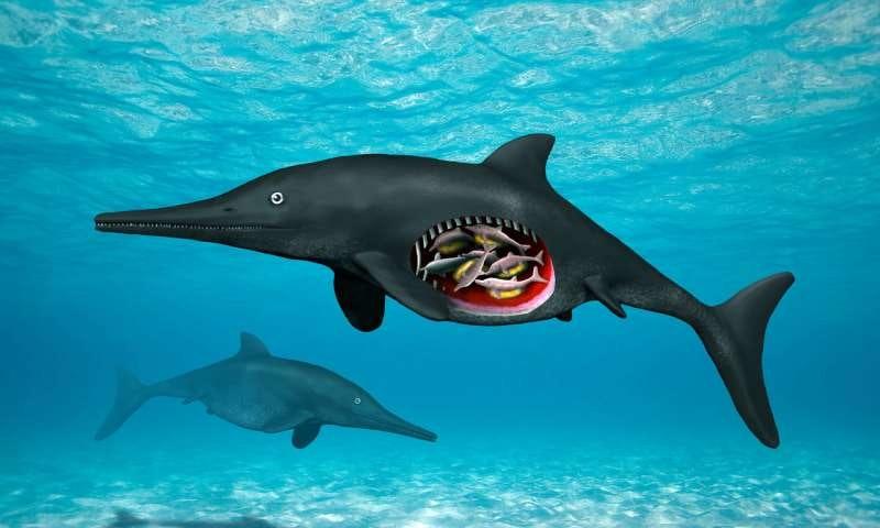 Ichthyosaur dinosaur