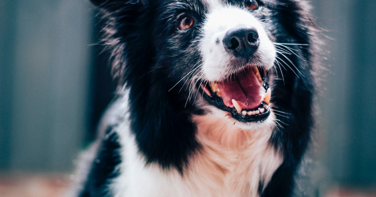 "The Science Behind Why a Dog Loves to Be Called a ""Good Boy"""