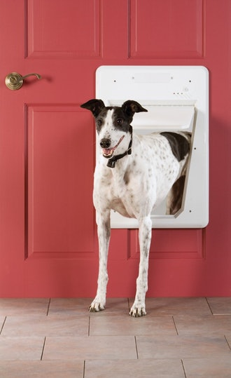 PetSafe Electronic SmartDoor, Automatic Dog and Cat Door