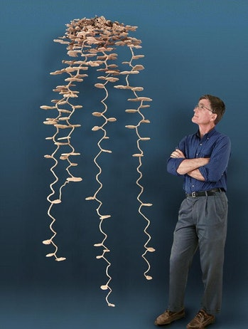 plaster cast of an ant colony