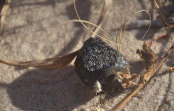botswana asteroid