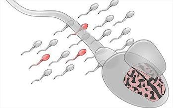 sperm mosaicism
