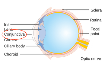 parts of eye