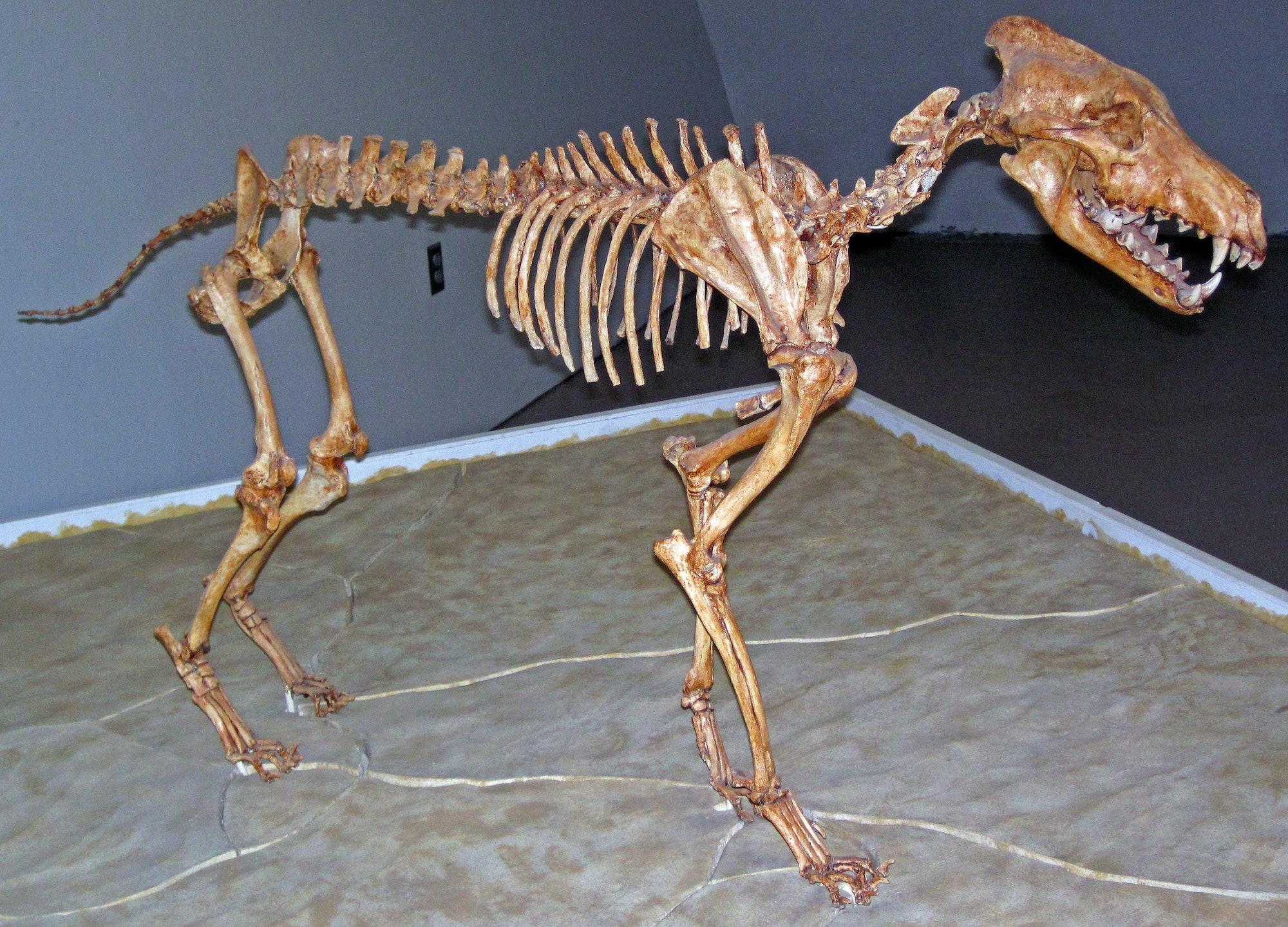 direwolf skeleton de-extinction prehistoric animal Game of Thrones