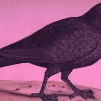 Crows Don't Even Need Instructions to Build Tools Anymore