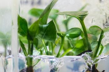 genetics plants