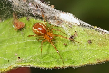 spiders, climate change